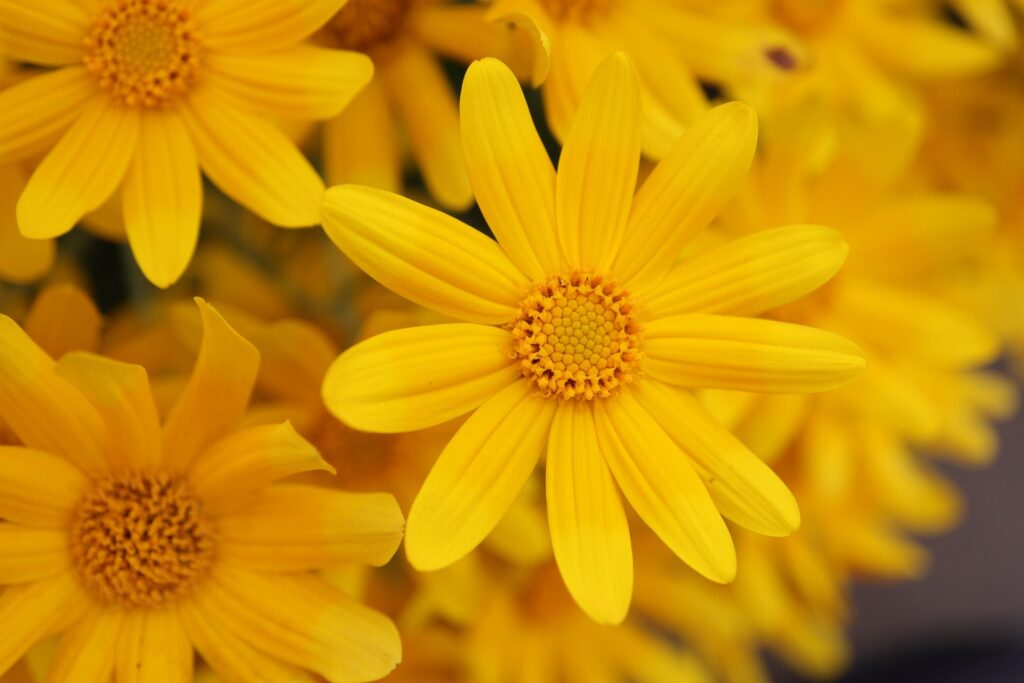 hashtags for flower photography